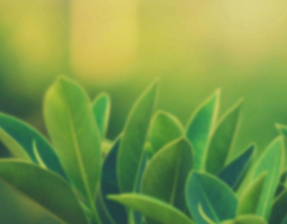 psaya-karşı-hangi-bitkiler-faydalı-gelir