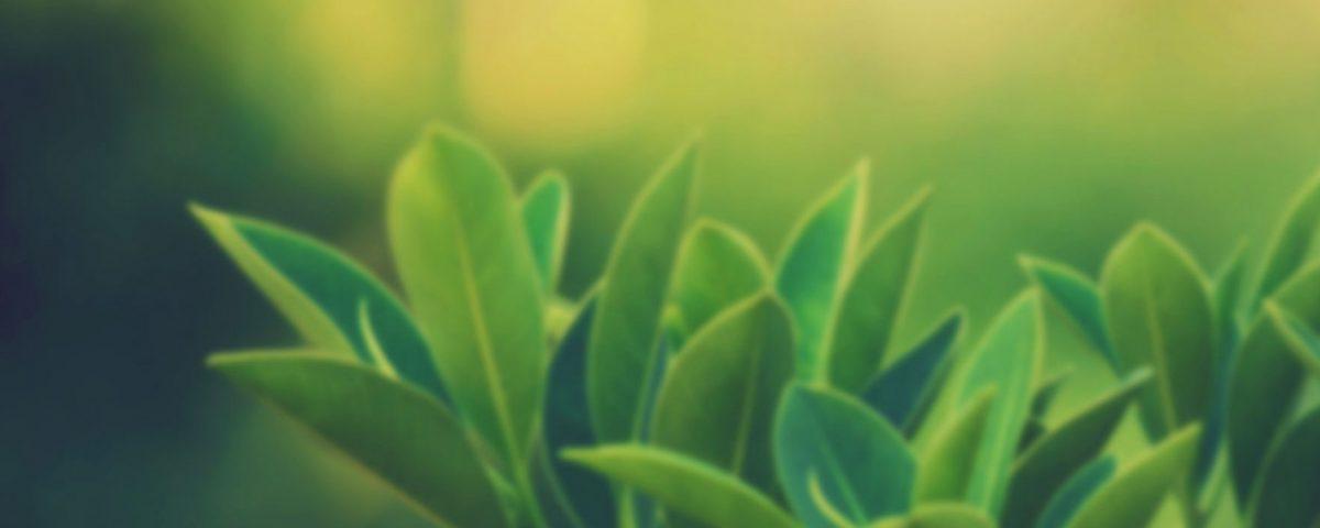 psaya-karşı-faydalı-bitkiler-nelerdir